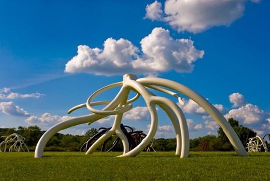 Steve Tobin | Calgary Root